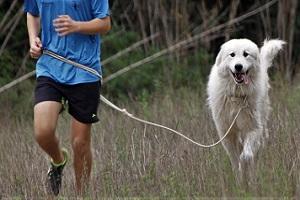 adiestramiento-canino-deportivo