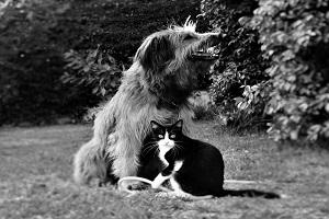 adiestramiento-convivencia-entre-perro-y-gato