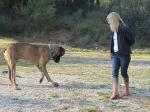 juegos-en-residencia-canina