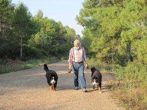 paseo-en-residencia-canina