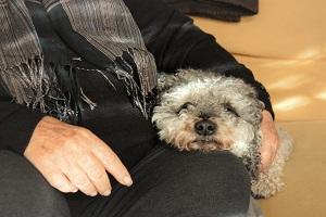 perro-para-personas-mayores