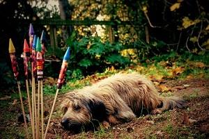 modificacion-de-conducta-canina-y-los-ruidos