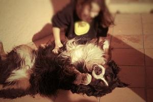 convivencia entre perro y niño