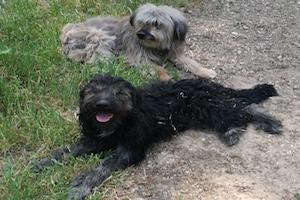 La castración en los perros